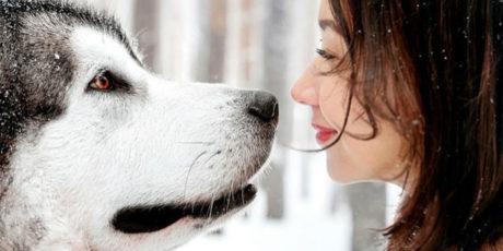 «Не рычите на собаку» – Карен Прайор