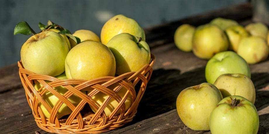 Рецензия по произведению антоновские яблоки 3148