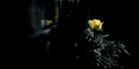 Екатерина Яковлева и новый сборник стихов «Кладбище забытых душ»